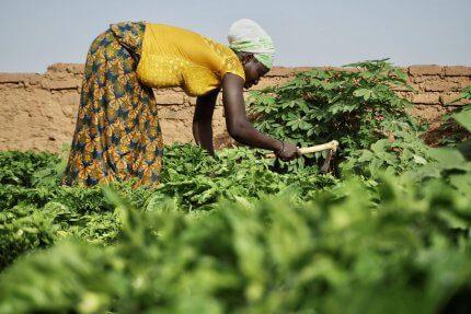 kobieta pracująca w ogrodzie w Burkina Faso